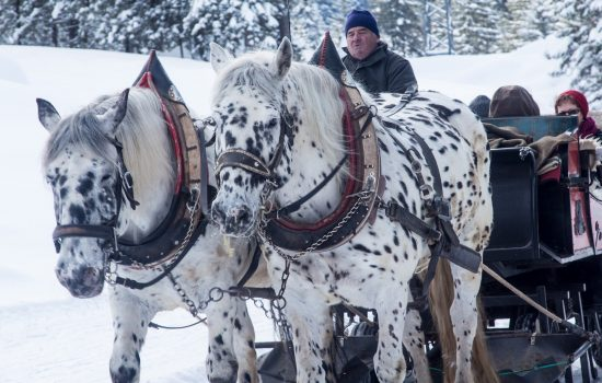 winter-horse sleigh ride